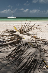 Catamaran and palm leaf at Cayo Blanco, Cuba