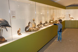 Child in museum pointing at birds