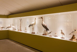 Birds on display in a museum
