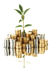 plant growing out of gold and silver  coins isolated