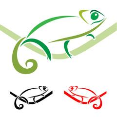 Chameleon on a white background, vector