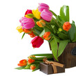 blooming  tulips with present