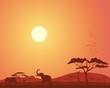 obraz - africa landscape