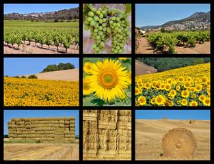 Nine mosaic photos of farming : vine, sunflower and wheat