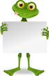 Frog with a white paper