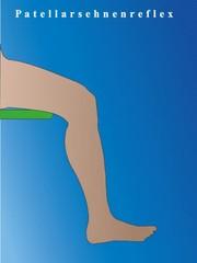 Patellarsehnenreflex - sitzend