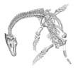 Prehistory - Plesiosaurus (Lias)
