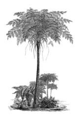 Prehistory - Tree Fern - Fougère Arborescente