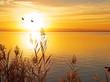 partiendo el sol - 48314070