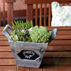 dekorative pflanzschale mit dickblattgewächsen