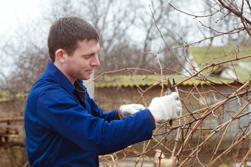 Young man pruning branch