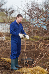 Young man pruning branch in a garden