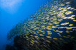 School of Fusiliers swimming over a reef in the Similan Islands