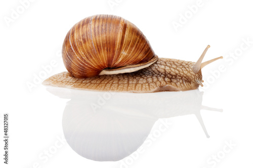 snail isolated