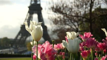 morning near the Eiffel Tower