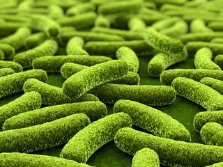 Bakterien - 3D Visualisierung