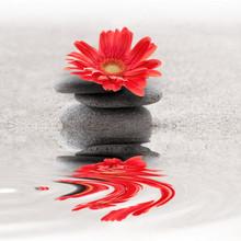 Galets et reflet gerbera zen