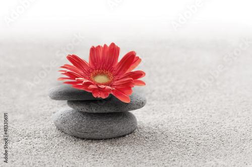Obraz na Szkle Sable et gerbera zen