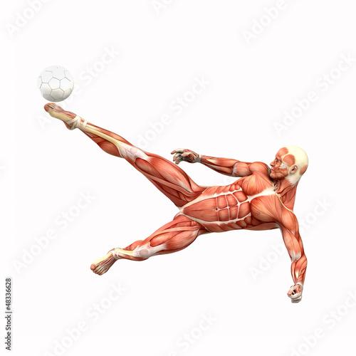 GamesAgeddon - Fussballspieler Fallrückzieher Muskel Anatomie ...