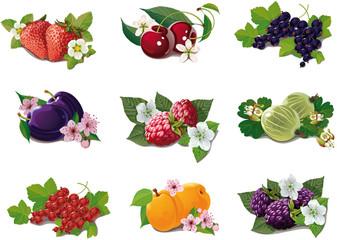 set of ripe fruits