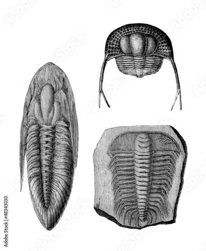 Prehistory : Trilobit (SilurianPeriod)