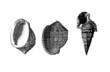 Prehistoric Shells - Fossil - Eocene