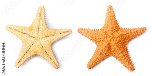 Leinwanddruck Bild The Caribbean starfish ( Oreaster reticulatus ).