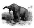 Extinct Prehistoric Animal : Dinotherium