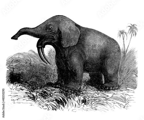 Extinct Prehistoric Animal : Dinotherium