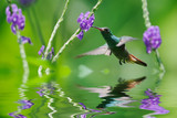 Beautiful hummingbird in reflection