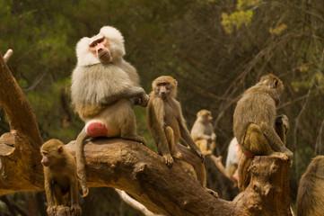 Una familia de monos