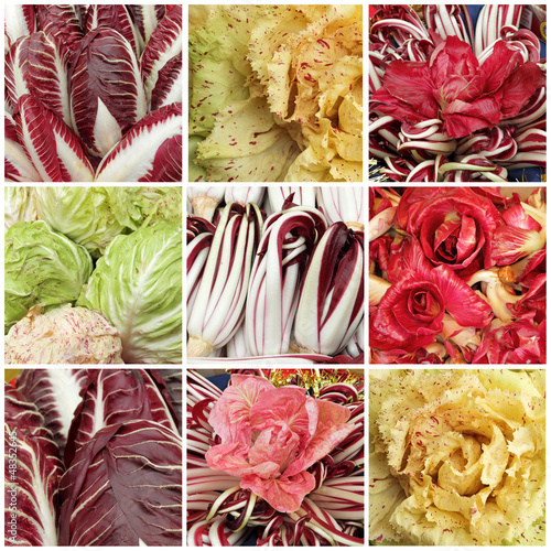 collage with images of radicchio mix,Radicchio Rosso di Treviso