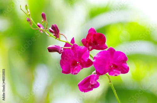 Fototapeten,blühen,blühen,botanical,botanik