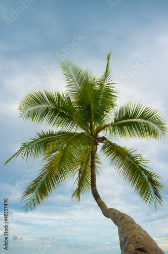 Palm tree low angle
