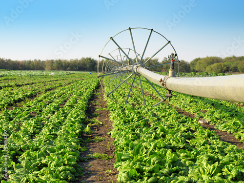 vegetable field and irrigation equipment