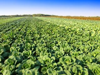green kale