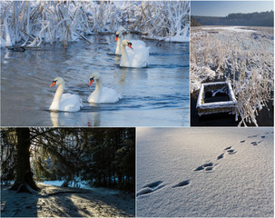 Postcard from winter scenery in nature