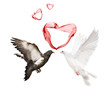 couple doves and red hearts