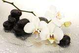 Fototapeta na białym tle - alternatywa - Kwiat