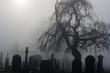 Leinwandbild Motiv Spooky old cemetery on a foggy day