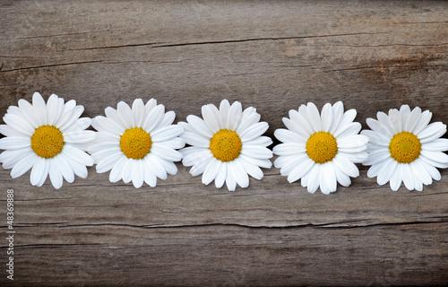 Fünf Gänseblümchen