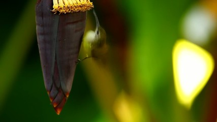 Little spider on banana flower,thailand