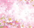 Vector of spring blossoming tree with pink background