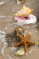 Background with sea coast and starfish on the sand.