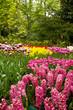 duch flowers field