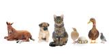 Fototapete Katze - Charakter - Nutztiere