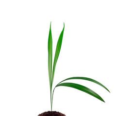 Grashalm wächst aus einem Häufchen Erde