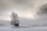 Fototapety Bare tree in foggy landscape