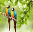Fototapeten,haustier,vögel,grün,papagei