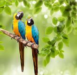 Fototapete Grün - Papagei - Vögel